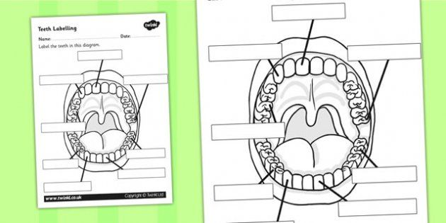 Teeth Labelling Worksheet - teeth, ourselves, my body, labels ...
