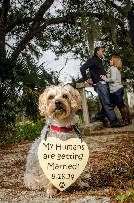 My Humans are getting Married Save the Date Sign Heart Signs Photography Props Enagement Pictures Wedding Dog Ring Bearer Flower Girl on Etsy, $18.99