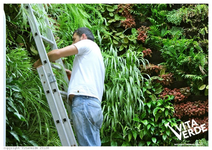 #verticalgarden maintenance @ i-bank store- National Bank of Greece, Thessaloniki