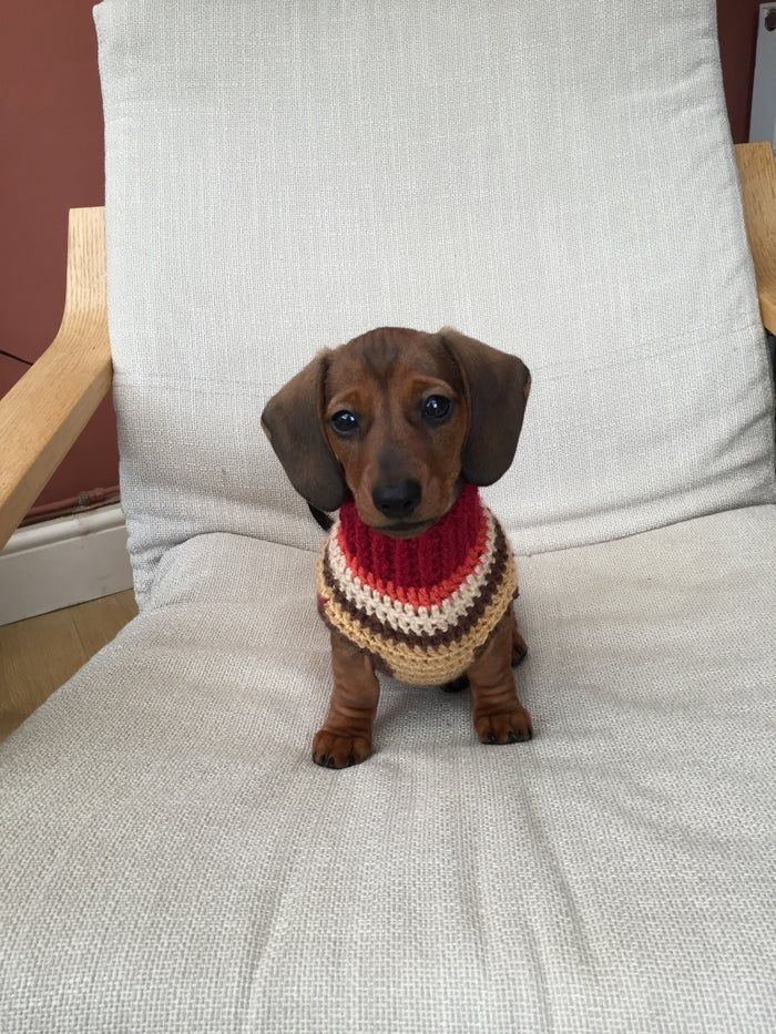 Home Snazzy Sausage Dog Jumpers in 2020 Sausage dog