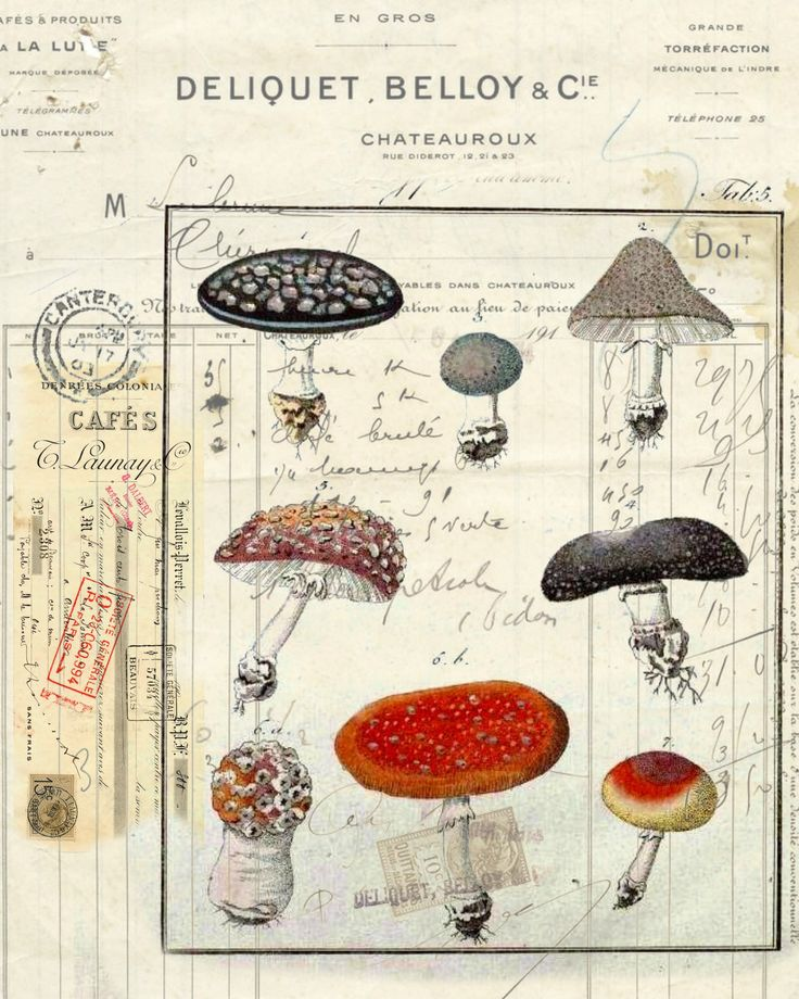 Botanical Print Mushrooms II