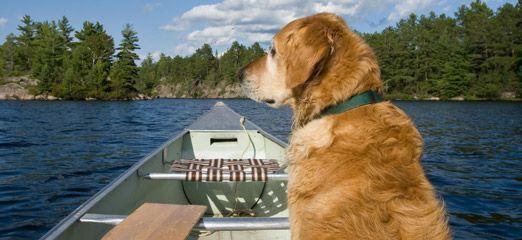 Prepper Pups: Your Dog is Your Best Friend in SHTF Scenarios