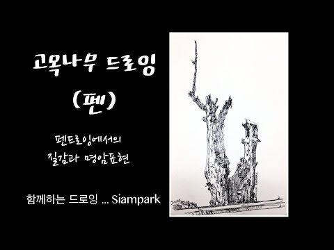 함께하는 드로잉 취미미술 - 펜 드로잉 ( pen drawing ) - 고목나무 - Siampark - YouTube