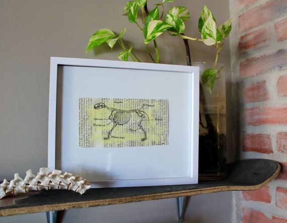 Yellow Cat Skeleton Anatomy Art Freehand by AnAwesomeLife on Etsy