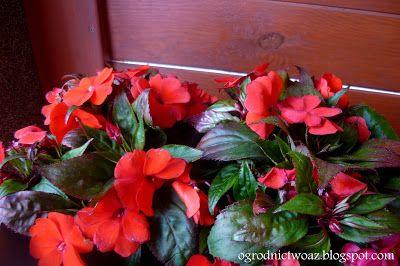 Ogrodnictwo od A do Z: Kwiaty na balkon i taras-  kwiaty na stanowiska za...