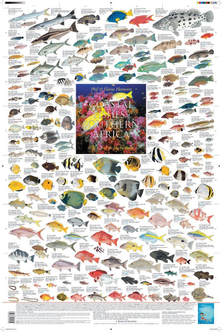 Freshwater fish of southern africa -  Coastal Fishes Of Southern Africa 3 Coral Rocky Reefs 2010