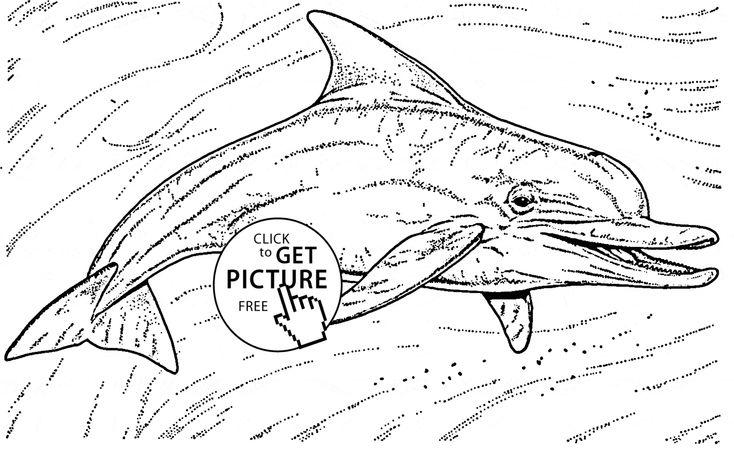 42 best dolphin images on Pinterest | Bottlenose dolphin ...