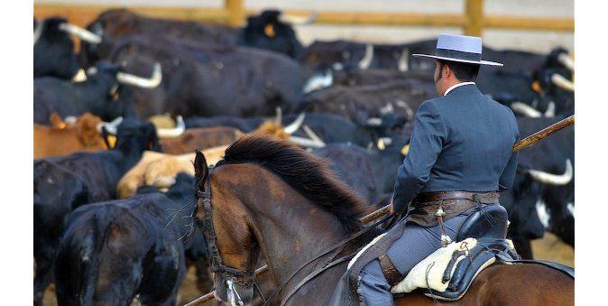 Presentación de los jinetes y vaqueros.