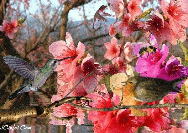 Pin De Andrea Hegyi Egri Em Madarak Flores Bonitas Flores Rosas