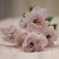 Товары Цветы из холодного фарфора. Alex Ashby – 7 товаров