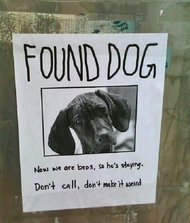 20 Funny Lost and Found Pet Posters Find pets, Funny signs and - lost pet poster