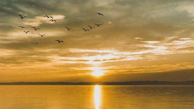Te ayuda a lidiar con la ansiedad, tristeza y frustración para recuperar la paz interior Paz Mental, Paz Interior, Serenity, Calm, Anxiety, Earrings, Spirituality