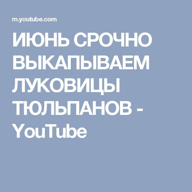 ИЮНЬ СРОЧНО ВЫКАПЫВАЕМ ЛУКОВИЦЫ ТЮЛЬПАНОВ - YouTube