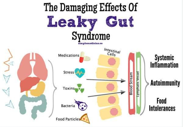Best Dog Food For Leaky Gut
