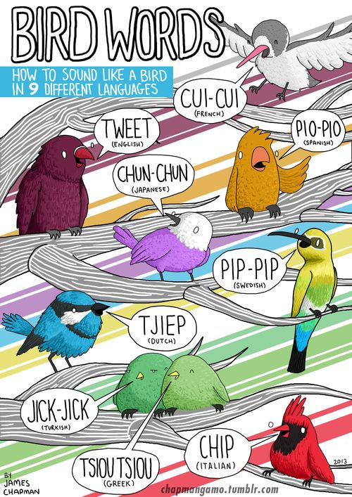 BIRD WORDSHow to sound like a bird in 9 different languages Available as a print from my Etsy shopHere's a link to the one about dogs ...