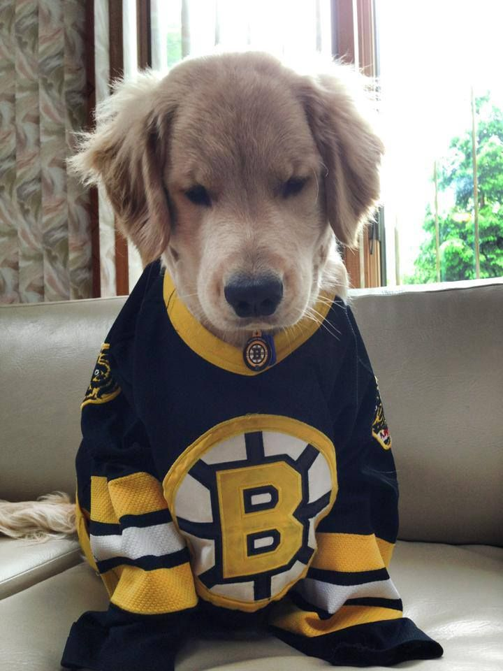 Lets go Bruins!!!!!