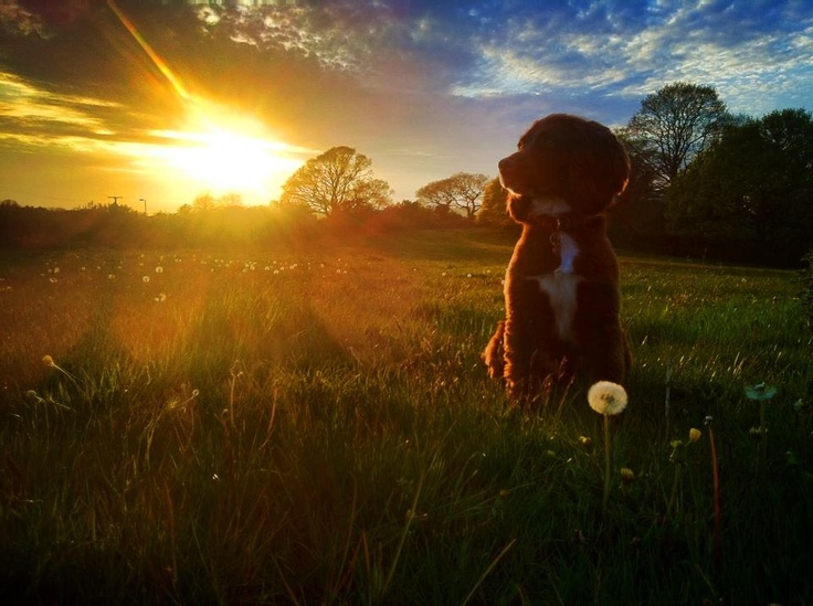 Sprocket at Sunset © Andy Casey Photography 2013