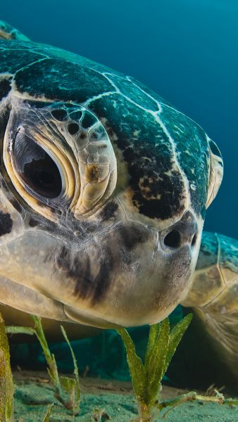 If I were a billionaire I'd build an entire house  around a huge aquarium so it could be seen in every room, then I'd help the wildlife people by helping take care of sea turtles.