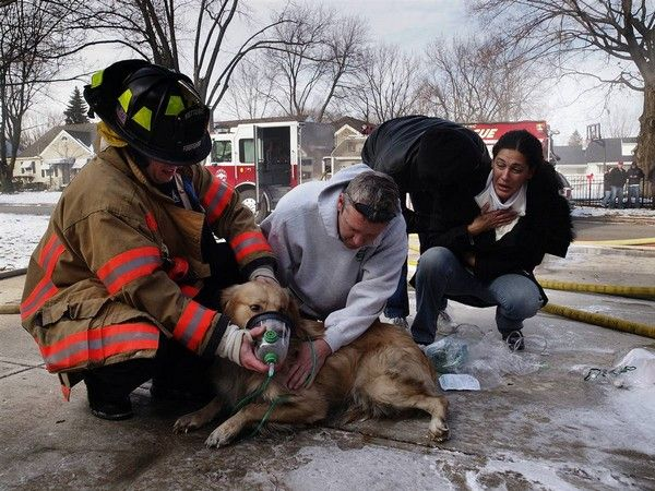 On The Verge Of Death*  Amir Bishara, right, tries to catch his breath after a golden retriever saved her from a fire in Kettering, Ohio. Local resident, along with firefighters trying to help the oxygen to revive the dog, who rescued from the garage full of smoke.  http://www.pluspets.net/animals-news/