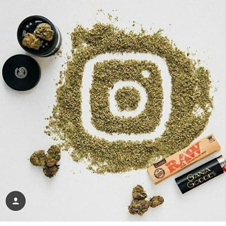Insta love _________________________________________ Via @HighFromWeed . . . . . . . . . HASHTAGS #cannabis #weed #cbd #thc #pot #medicalmarijuana #mmj #high #kush #ganja #420 #stoner #stonergirl #smoke #weedporn #blunt #joint #maryjane #blaze #broccoli #herb #chronic #highfromweed #hightimes #highsociety #ganjagirls #smokeweedeveryday