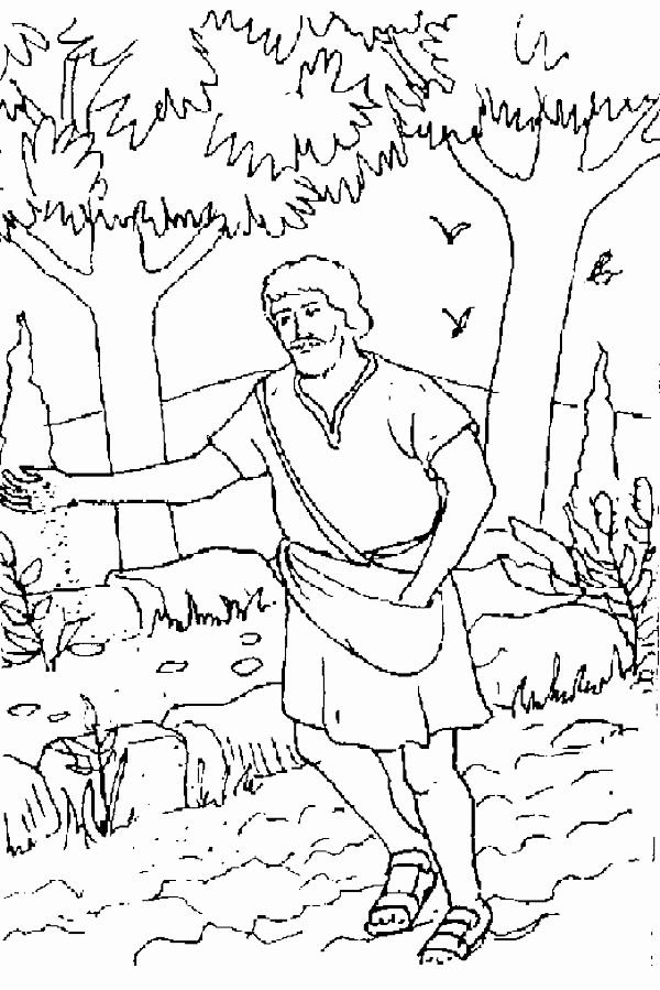 Parable Of The Sower Coloring Page Fresh Mustard Seed Coloring Page Sketch Coloring Page Free Coloring Pages Coloring Pages Inspirational Colouring Pages