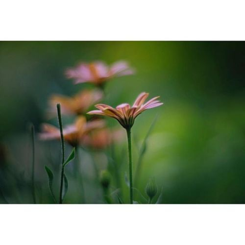 Great photo for a great day by @jennifercarter3 Wild flowers.  = Fuji X-E2  Helios-40 85mm 1.5 . . . . . #nature #naturephotography #flower #wildflowers #flowers #fujifilm_xseries #myfujifilm #fujifeed #fujifilm #helios #helios40 #vintage #lens #vintagelens #vintagelenses #oldlens #vintageglass #manuallens #bokeh #bokehlove #naturephotography #lifeelevated #naturephotos #provo #utah #utahisrad #sundance #cabin #cabinlife #XE2 via Fujifilm on Instagram - #photographer #photography #photo…