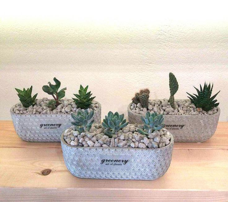 Centerpieces with succulents #greenery #pots #planters #airplants #succulents #cactus #plants #chania #greece