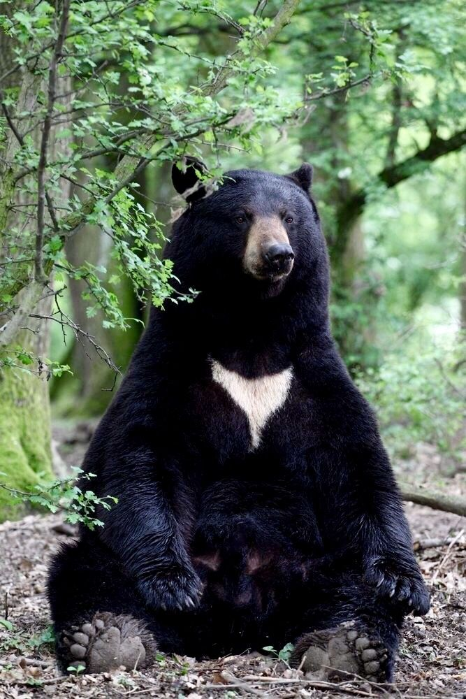 American Black Bear. By loflo69 from Getty Images