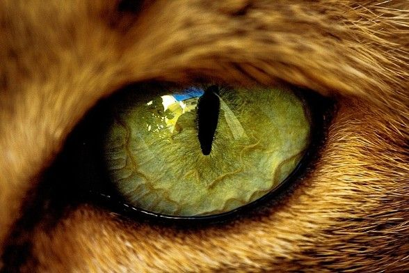 Tiger eye - amazing.