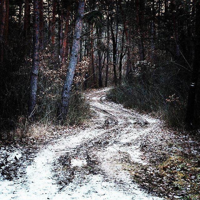 【stylertheone】さんのInstagramをピンしています。 《Az út 2017-ben folytatódik... :) | The road contuined in 2017... :) #Magyarország #táj #20162017 #erdő #táj #hungary #hó #blackpine #feketefenyo #havas #feketefenyő #út #tél  #道路 #lastpostoftheyear #黒松 #森 #forest #ハンガリー #冬 #ut #雪 #anyatermészet #sleepingnature #mothernature #nature #naturelove #自然 #nikon #naturephotography #ニコン》