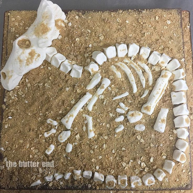 Poor little dead baby triceratops! This is a top down view of a birthday cake for a little boy with a dinosaur treasure hunt theme party. So fun!! #excavating #paleontology #diggingupdinoasuares #skeleton #dinosaurbones #dinosaur #triceratops #yummydirt # | by www.thebutterend.com