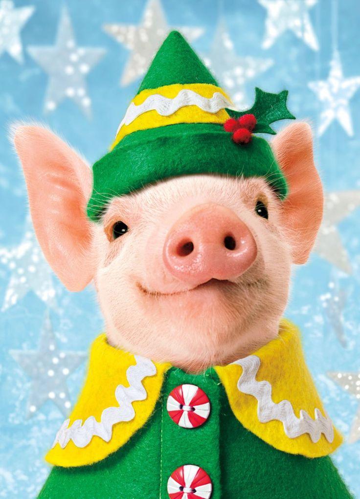 фото свиней поздравления очевидцы дтп рассказали