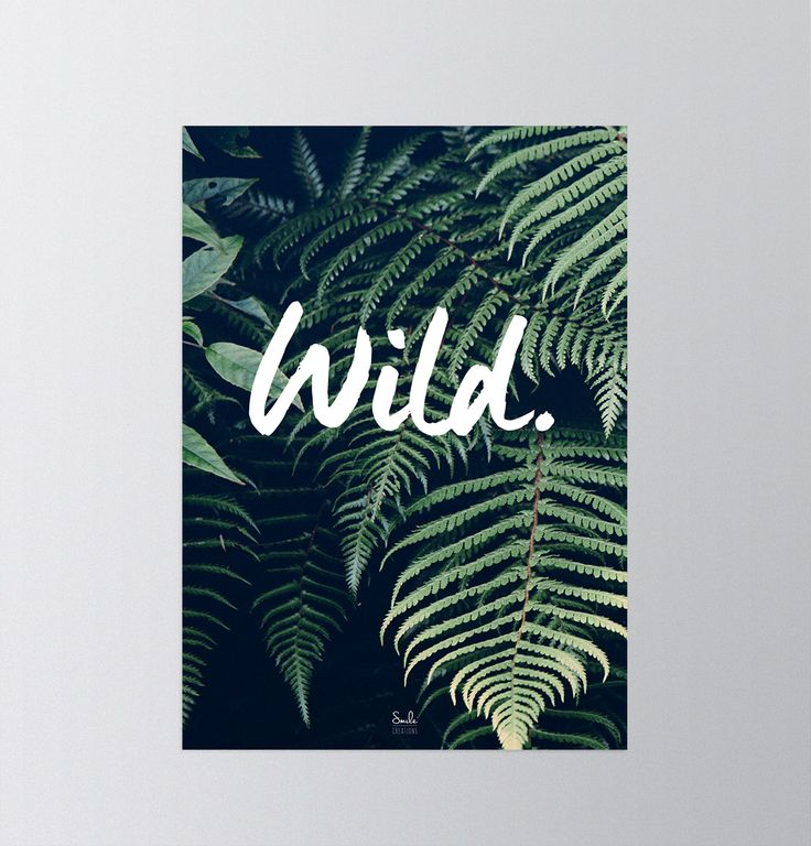 Wild Poster 50x70 - Buy it on the facebook site Smile Creations.