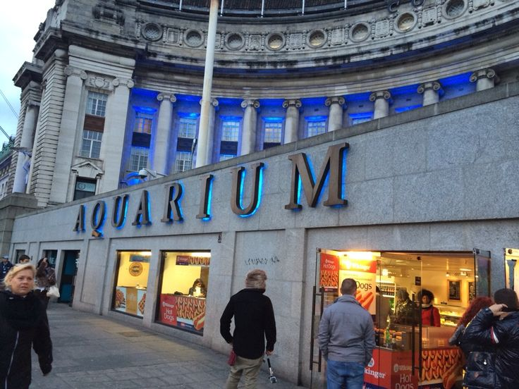 Hidden within the old County Hall is the London Aquarium. Great day out with the kids.