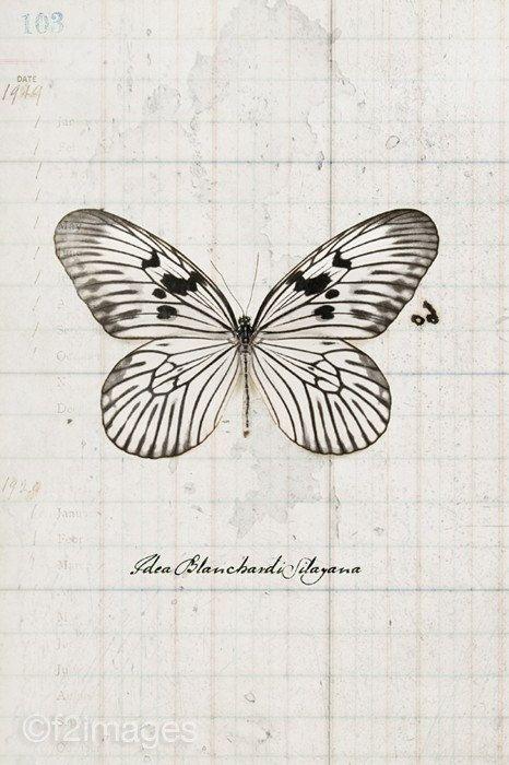 8 x 12 Reispapier Schmetterling