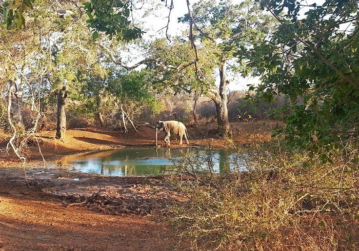 Foto del mese di #settembre: Sri Lanka, Andrea Bonazzi.  Clicca qui se vuoi partecipare inviando una tua #foto di #viaggio: http://www.viaggionelmondo.net/invia-il-tuo-scatto/