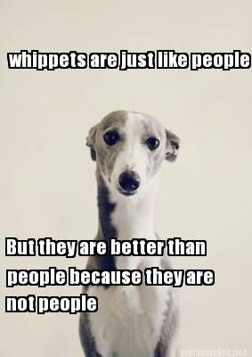 Meme Maker - whippets are just like people But they are better than people because they are
