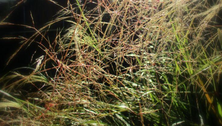 beautiful grasses capturing the morning light