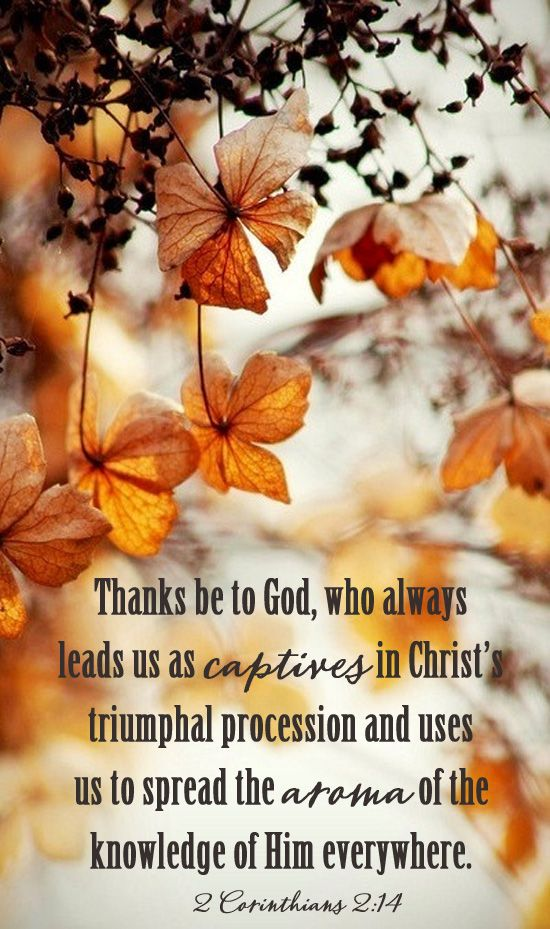 Falling Leaves Live Wallpaper 123 Best Autumn Bible Verses Images On Pinterest Bible
