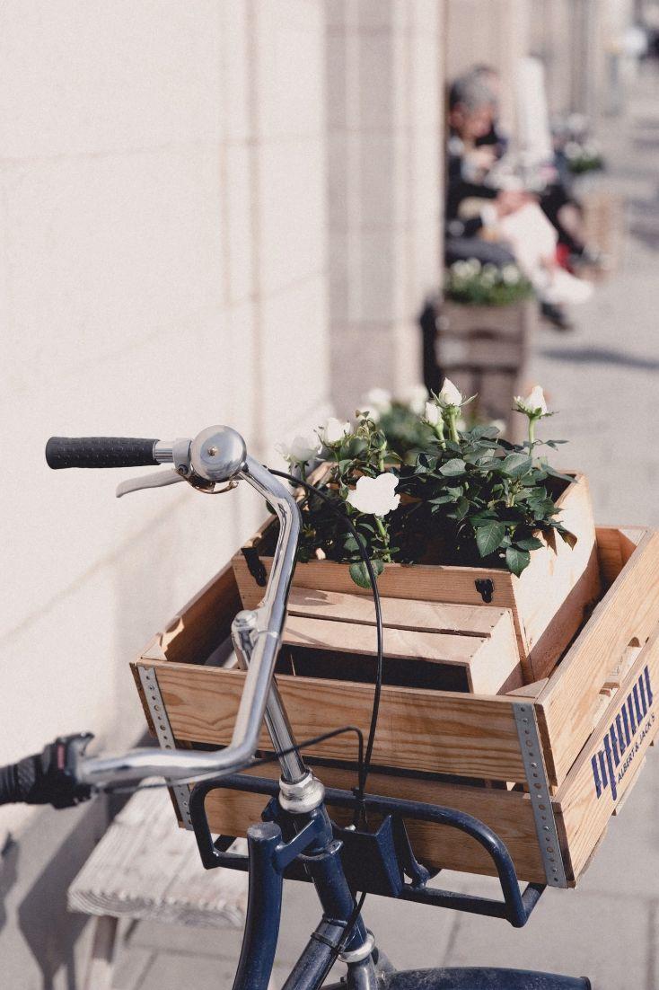 Photo by Marten Bjork on Unsplash White Flowering Plants, Bjork, Happy Earth, Pink Tone, Flower Images, Plein Air, Sustainable Living, Container Gardening, White Flowers