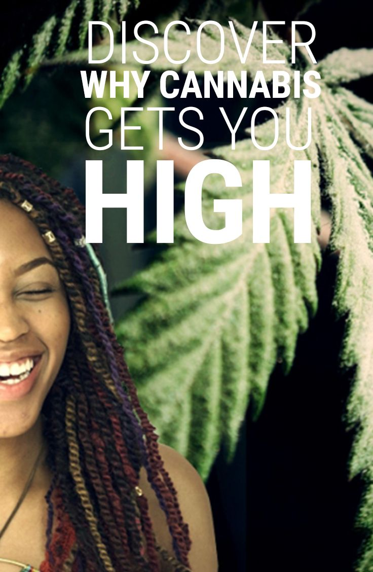 Every cannabis user is familiar with the pleasant sensation of getting high, but if you have ever wondered exactly what causes the wonderful effects of weed we've found the scientific stoner-friendly answers. And we've stumbled across the most ingenious cannabis hypothesis.