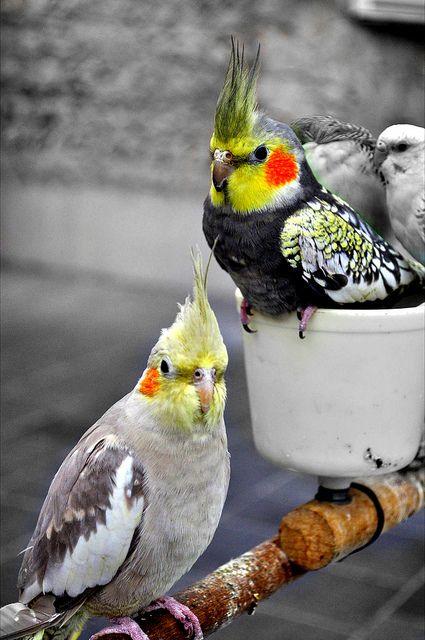 Les 54 meilleures images du tableau oiseau sur pinterest for Cocktail perroquet