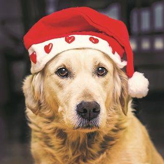Christmas Sorted ... Woof!