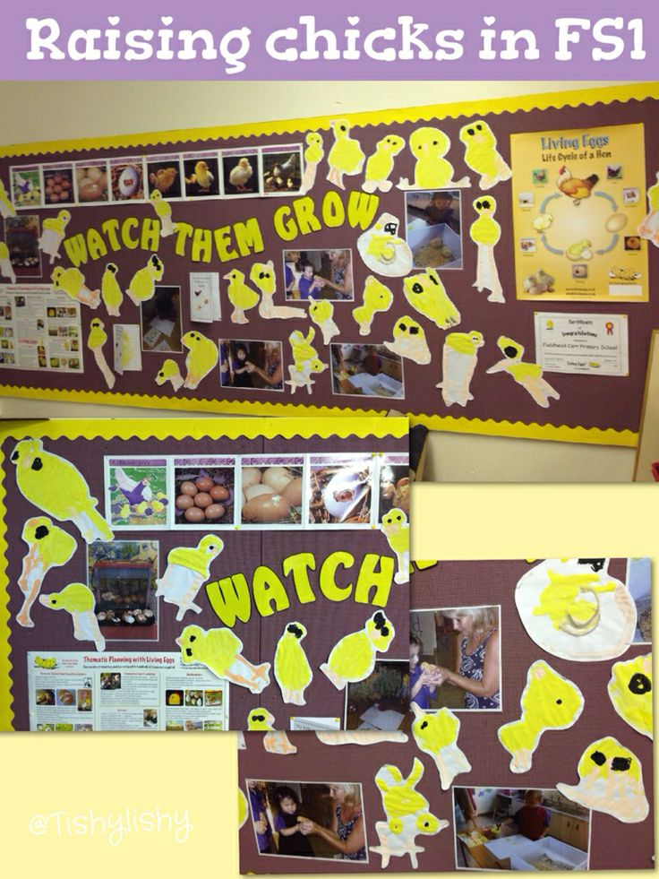 'Raising chicks' a display by my FS1 colleague @Rachel Winstanley