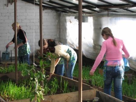 Костромские школы будут выращивать картофель, чтобы сэкономить деньги   K1NEWS Кострома