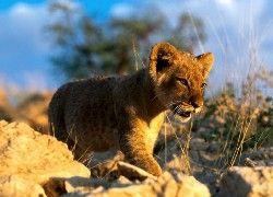 Słodkie Zwierzęta