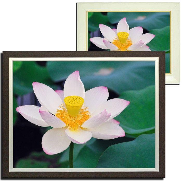 壁掛けアートアートパネル風景画フォトグラファーy2-hiro写真額縁付き蓮ハス植物白緑春夏自然母の日花ギフトインテリア雑貨キャンバスジグレー版画