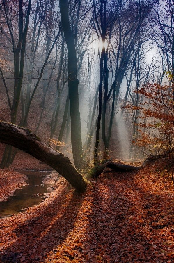Lights the Path, The Mystical Forest, Netherlands