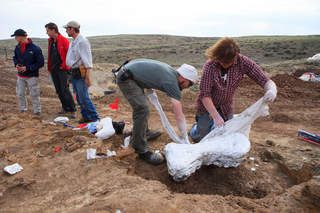 3 Triceratops skeletons unearthed near Newcastle, Wyoming!