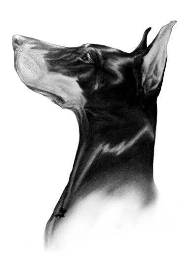 Doberman art